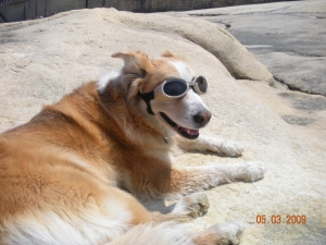 Deputy Dog in Doggles, bright sun in Malta