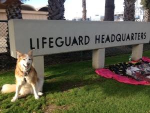 Tayla Lifeguard headquarters