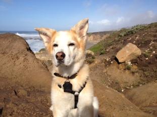 Deputy Dog Digs Derby's story