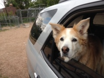 Tayla at Lifeline in car