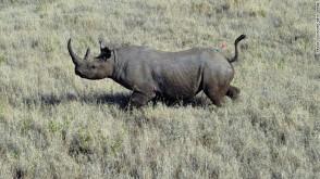 wwf-black-rhino-