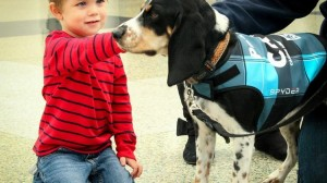 Airport Pet Therapy