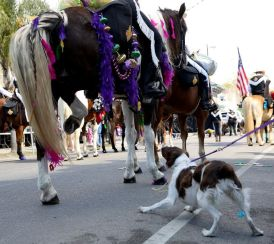 horse on parade